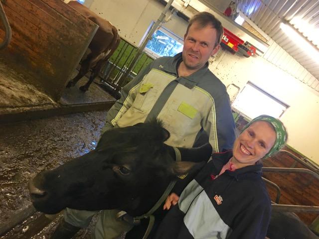 antibiotika dyrevelferd kukontrollen norsk melk kvalitet