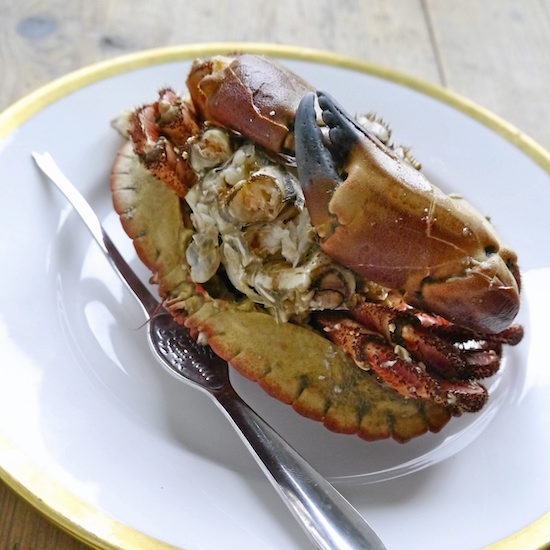 Mmm... Klassisk krabbe. Ser ju uskyldig ut, men følg med!