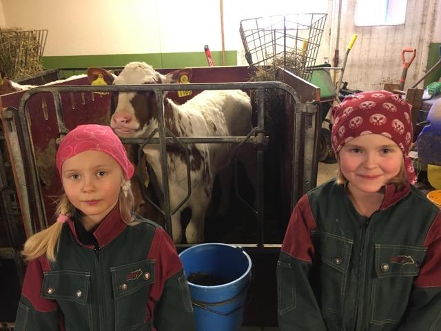 kukontrollen antibiotika dyrevelferd norsk rødt fe