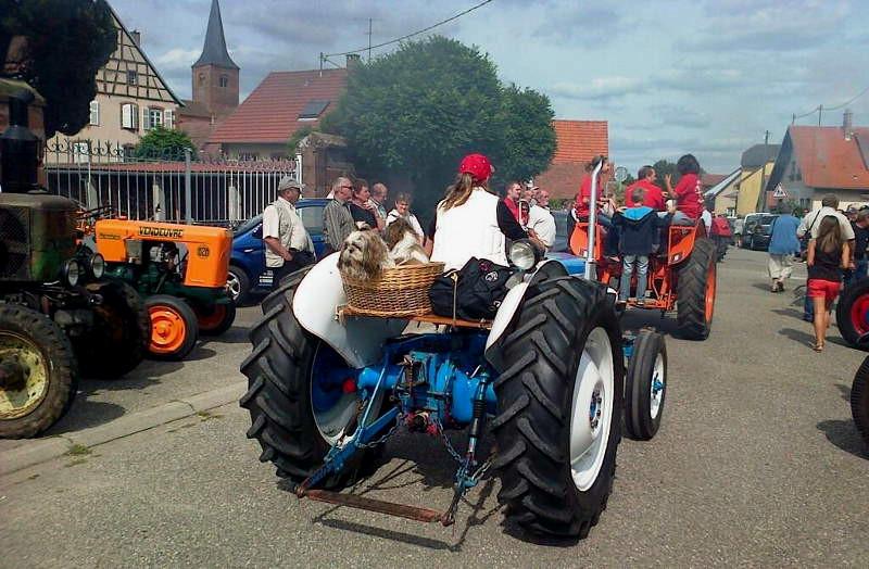 madame sur son tracteur avec les chiens, mais dans la fumée !!