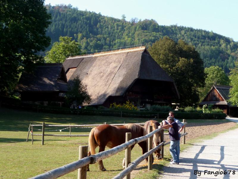 Les amis qui parlent à l'oreille des chevaux