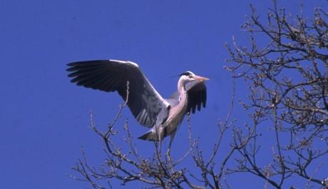 Velocità di uscire Torre Heron