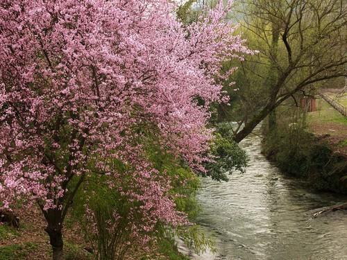 Primavera sul fiume Aniene, presso SUBIACO
