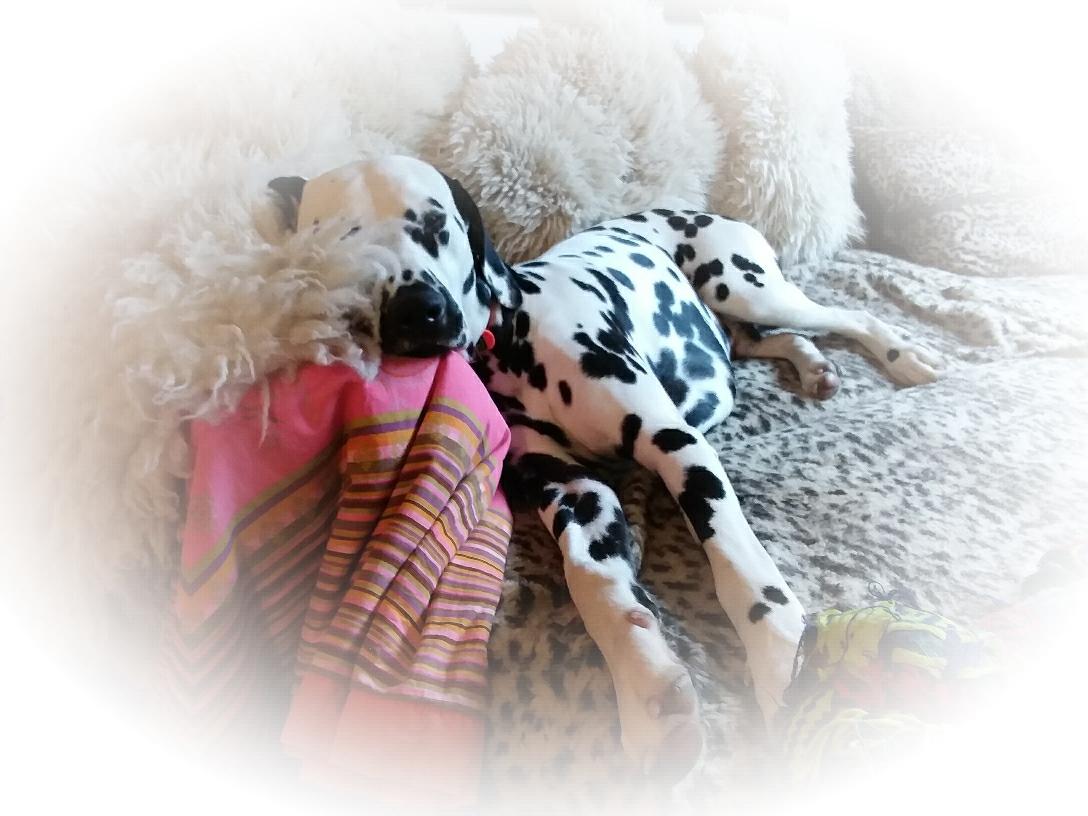 11 Monate alt
