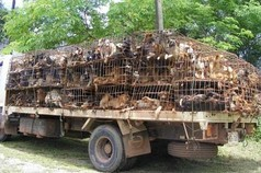 Hundefleisch