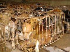 Hundefleischhandel Thailand
