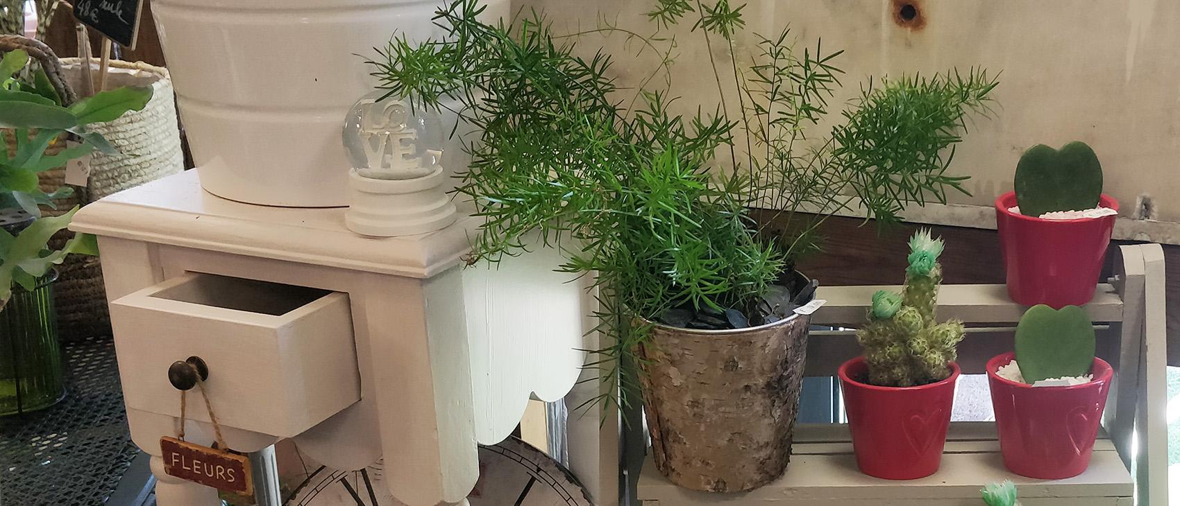 Des plantes et de la déco !