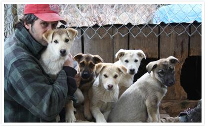 Yannick et les chiens de traîneau de Laurel Aventure Nature
