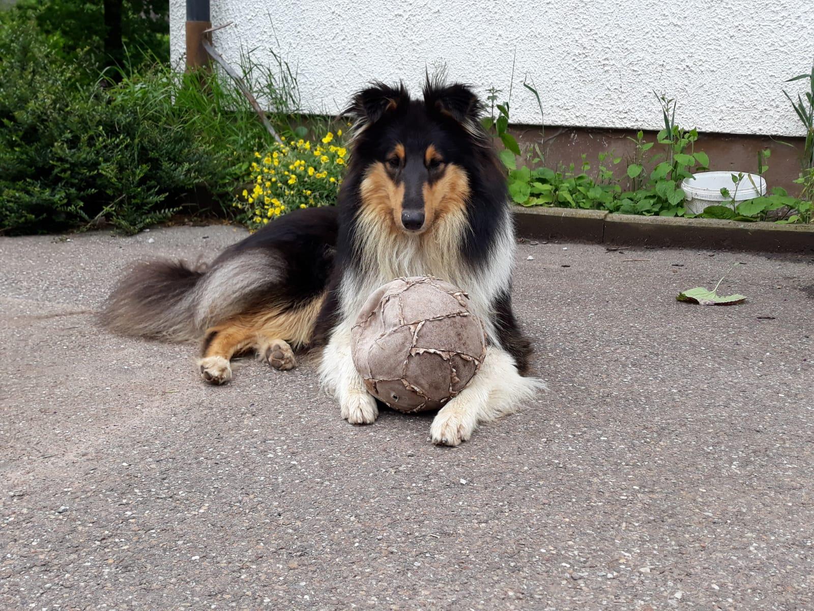 Chilly-Jo mit ca. 1,5 Jahren