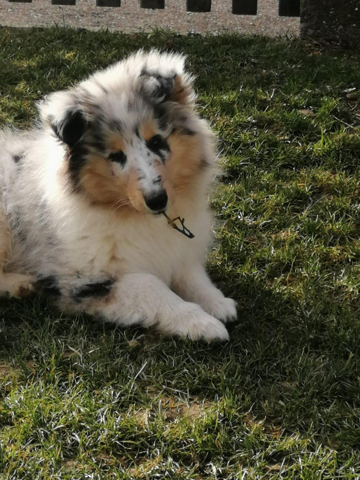 Gwen mit ca. 11 Wochen