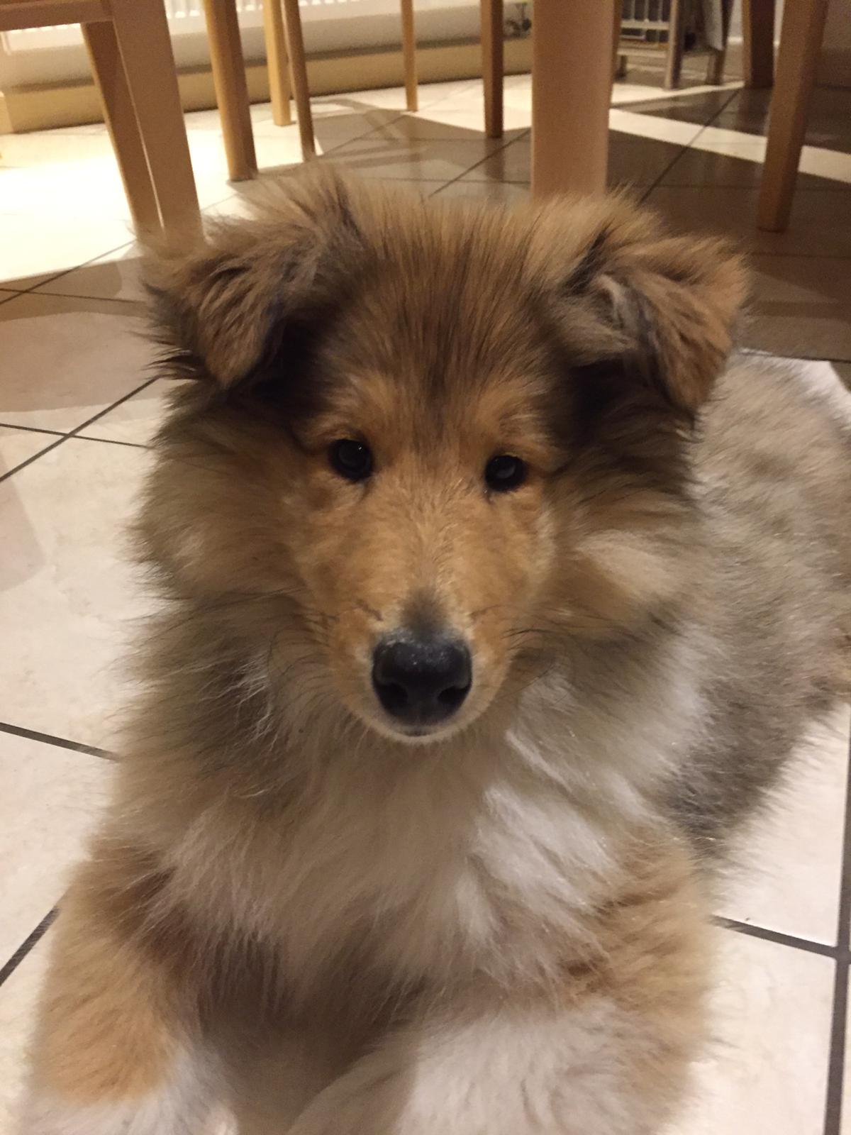 Enzo mit ca. 16 Wochen