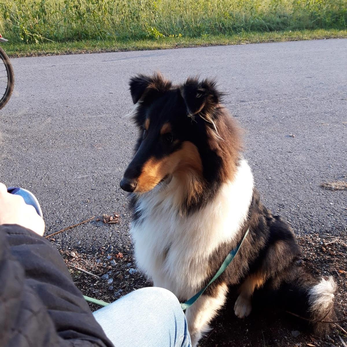 Chilly-Jo mit ca. 1nem Jahr