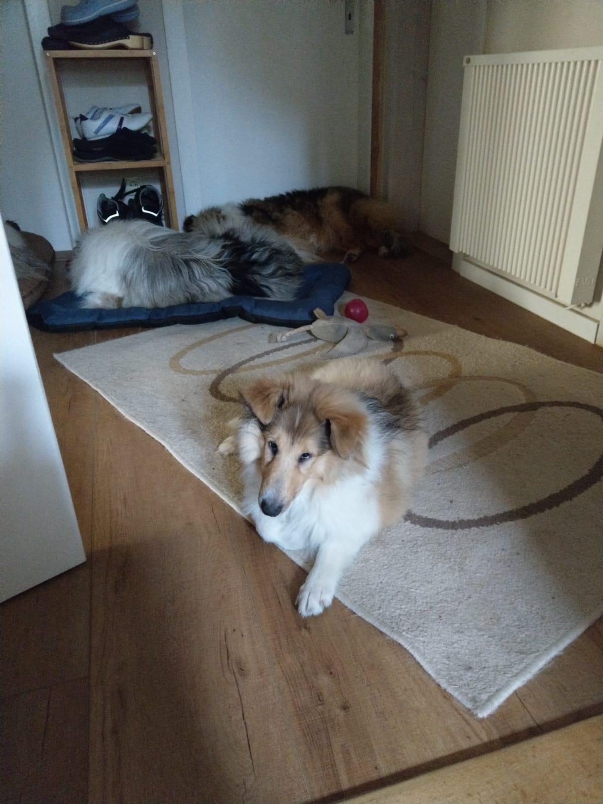 Daisy jetzt Lini im neuem Zuhause