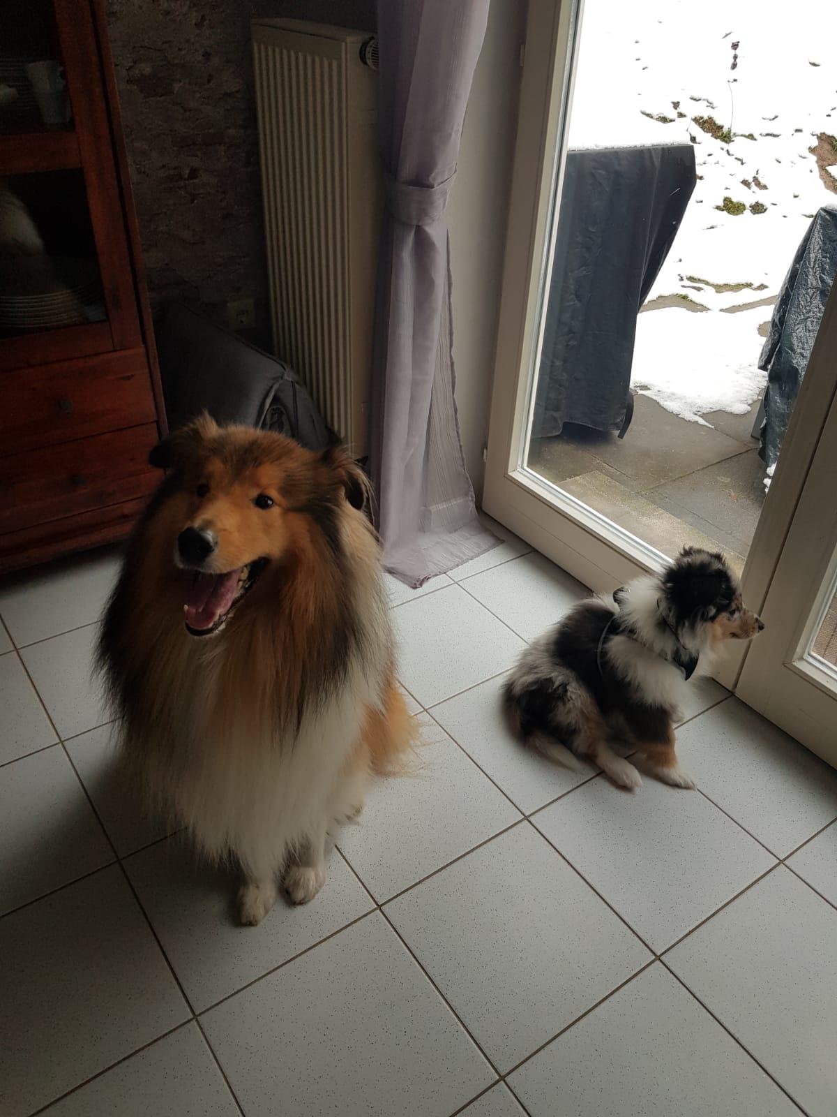 Garwin im neuem Zuhause mit Kumpel Tayo ( Donny )