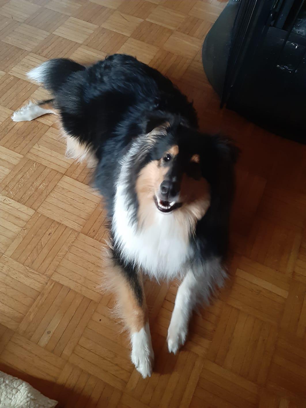 Ernie mit ca. 8 Monaten