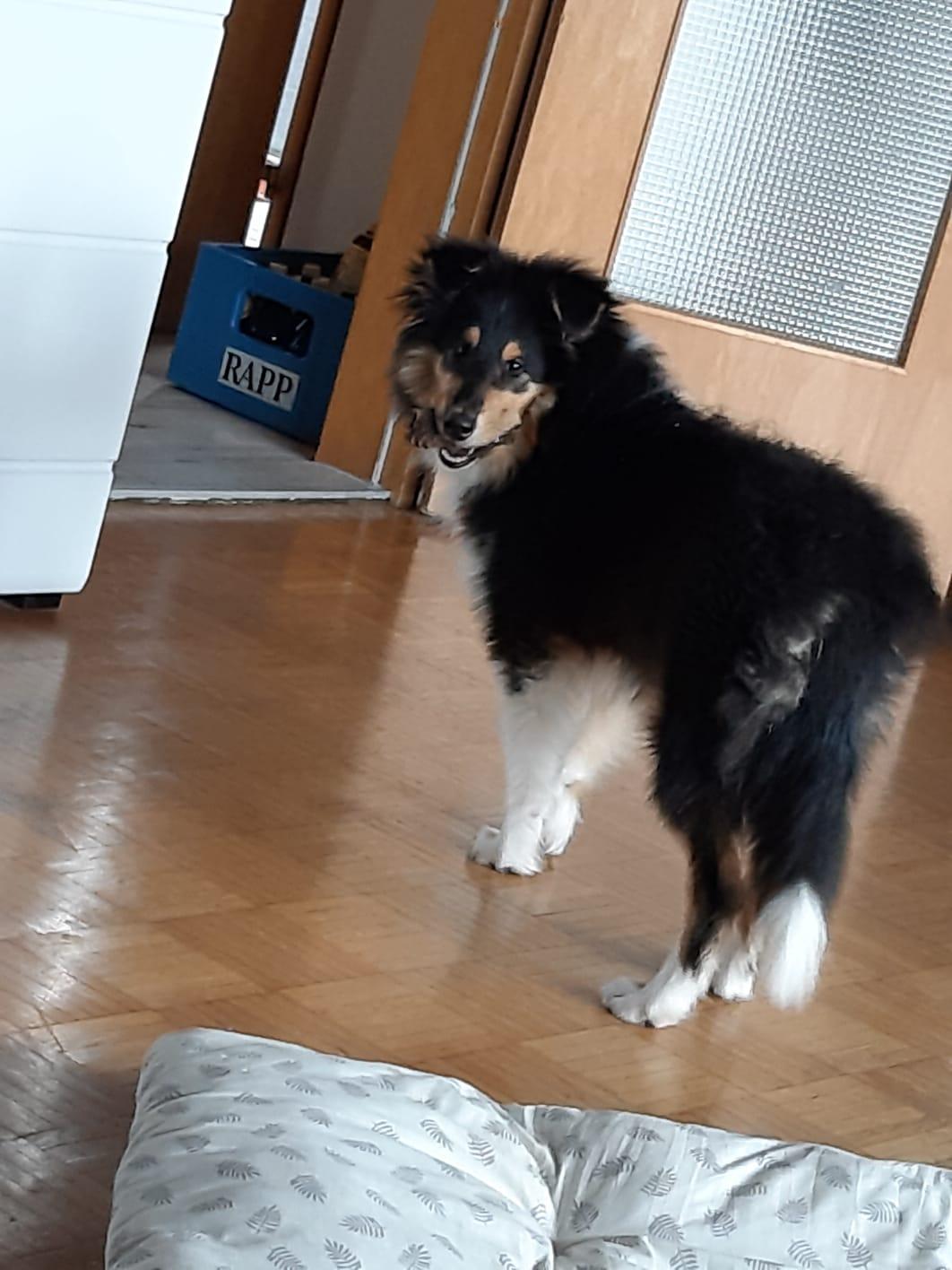 Ernie mit ca. 5 Monaten