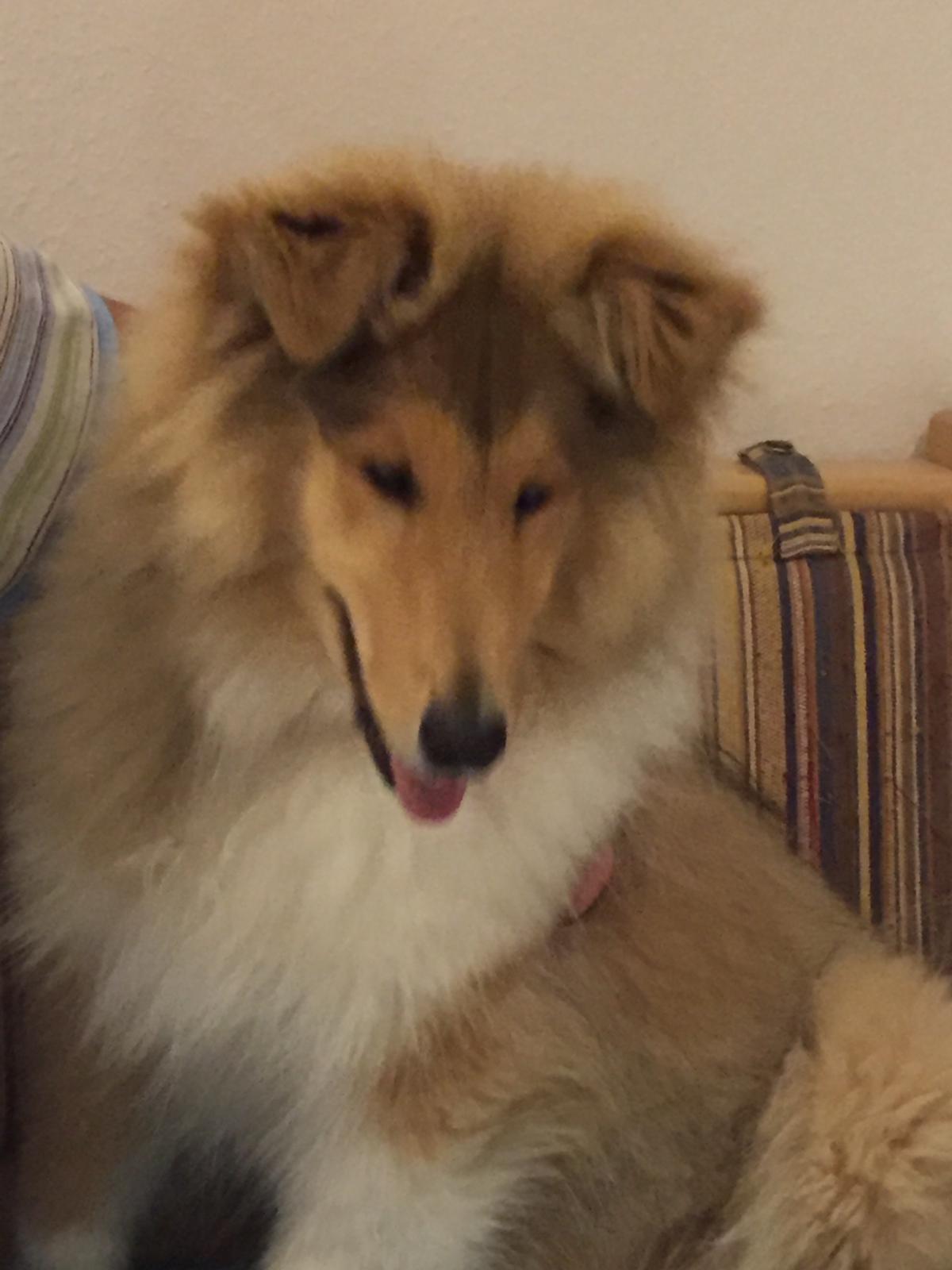 Enzo mit ca. 5 Monaten
