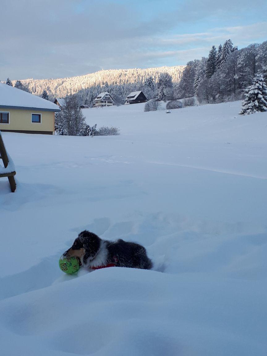 Bea der Schneehund