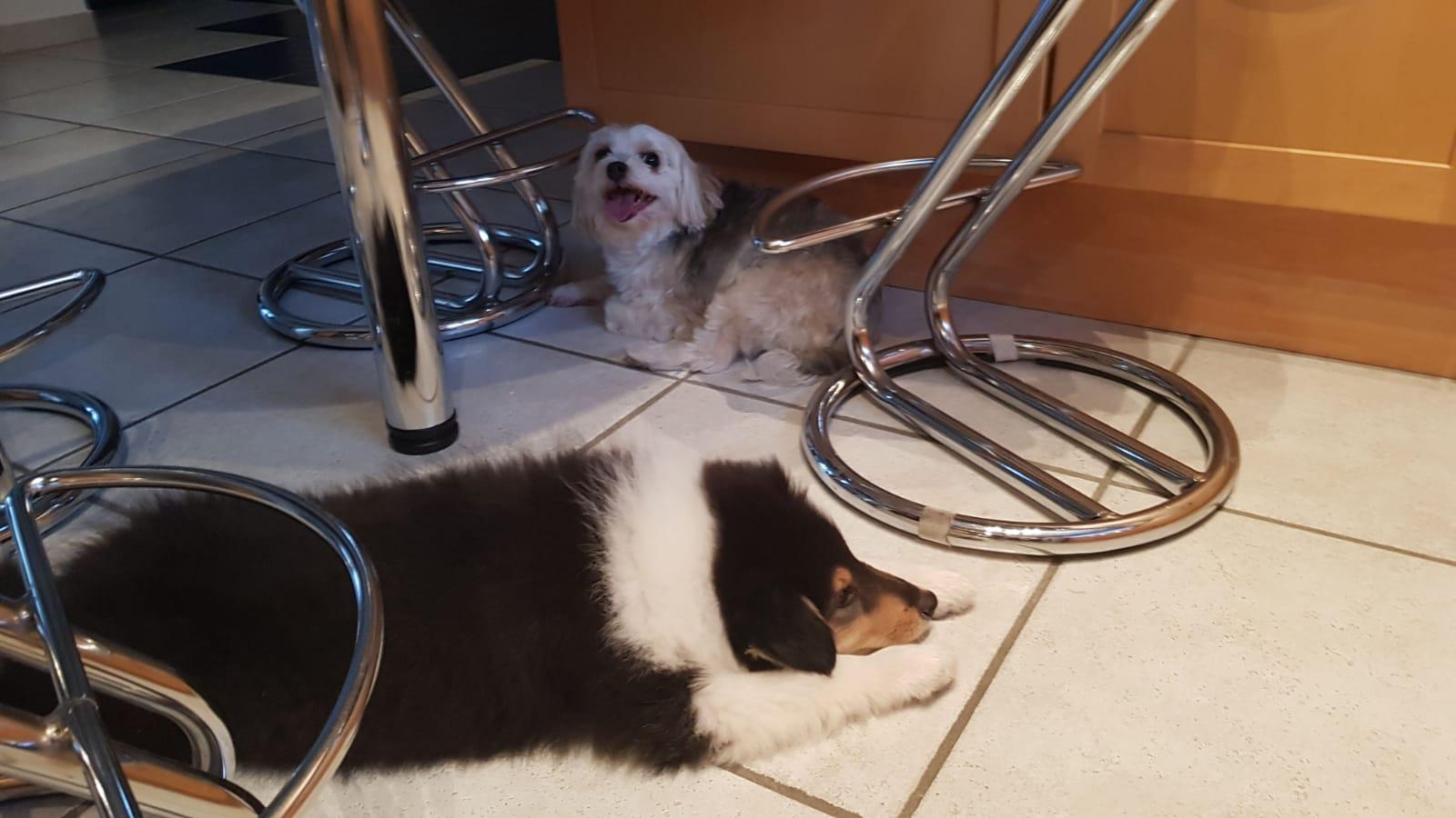 Franky im neuem Zuhause mit seiner kleinen neuen Freundin