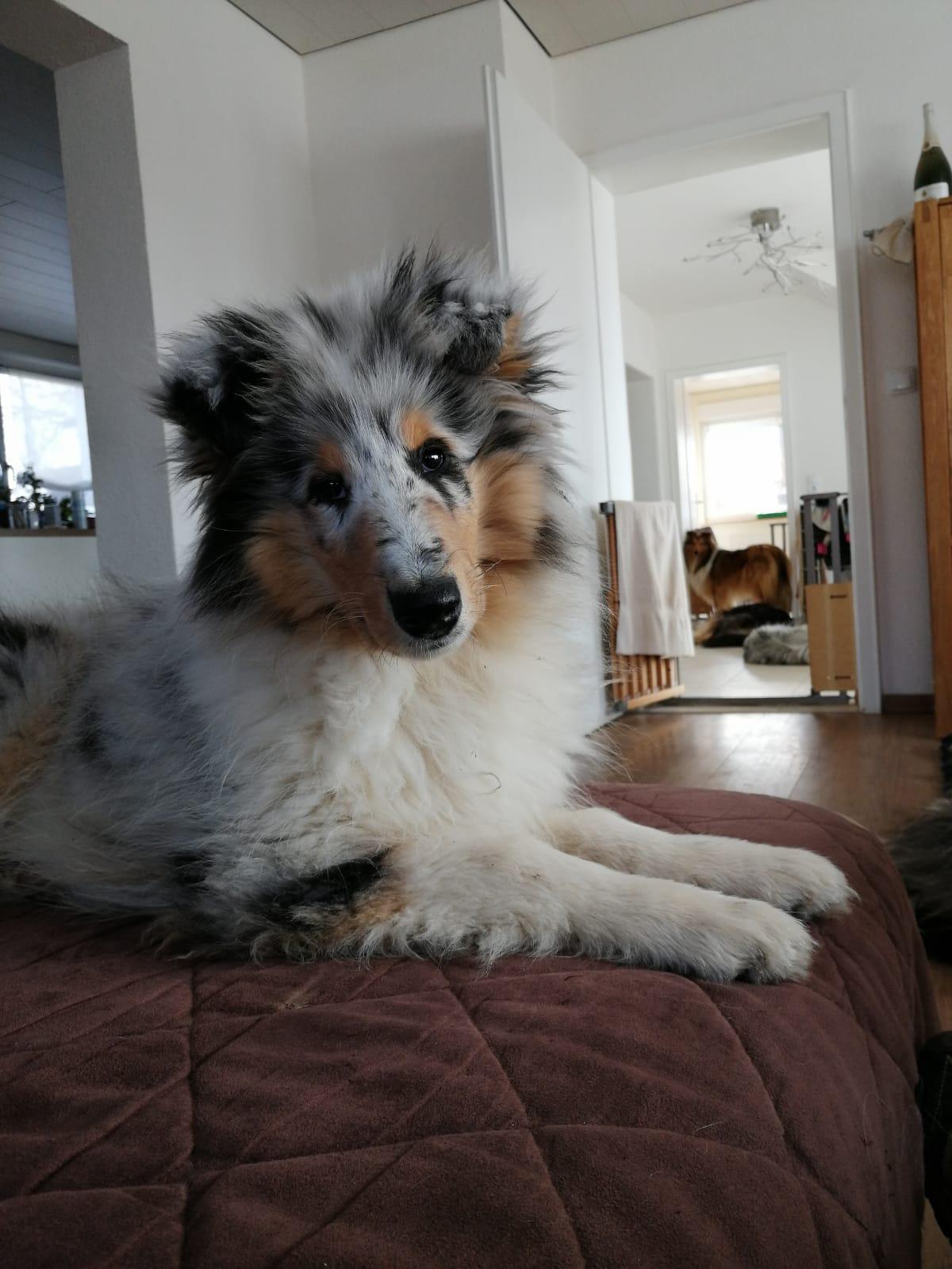 Gwen mit ca. 16 Wochen