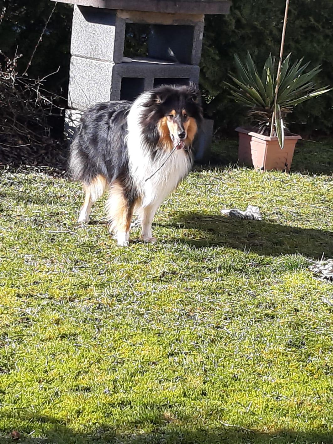 Ernie mit ca. 10,5 Monaten
