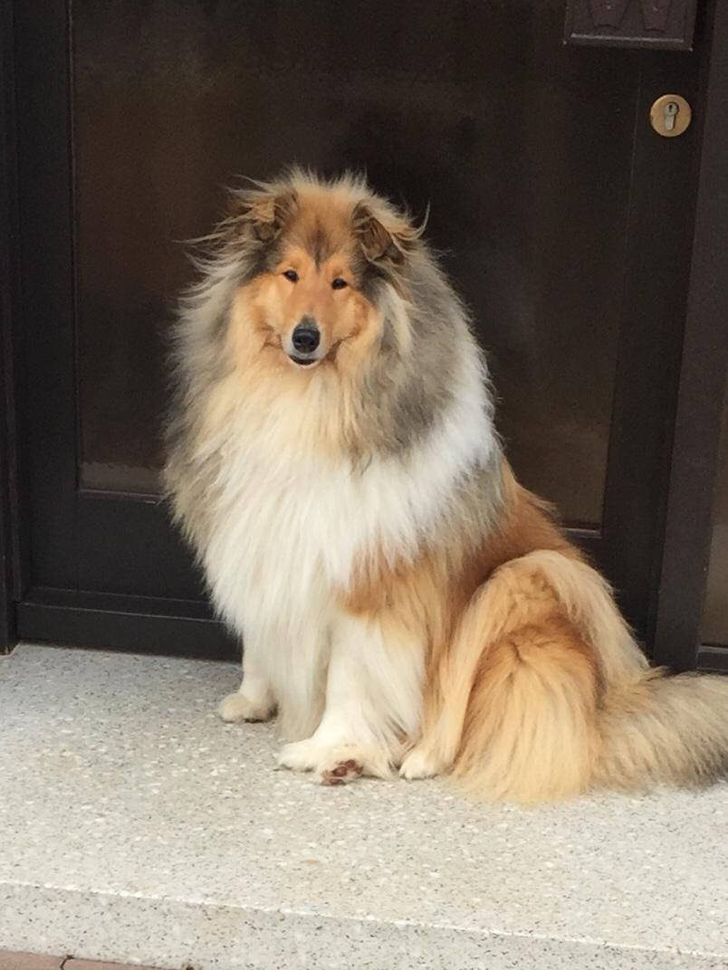 Enzo mit 12 Monaten