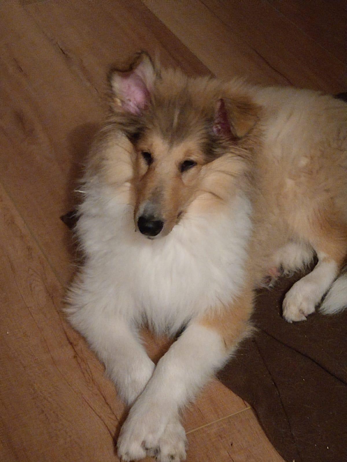Daisy mit ca.17 Wochen