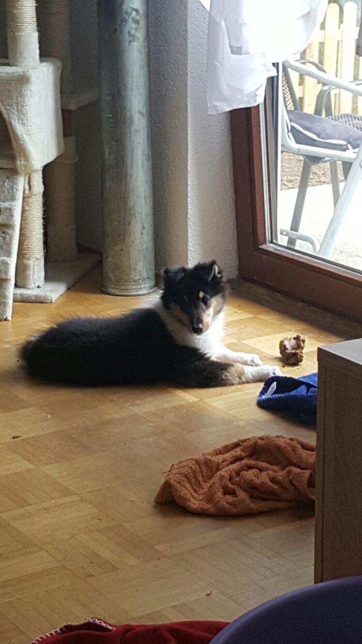 Amelia im neuem Zuhause