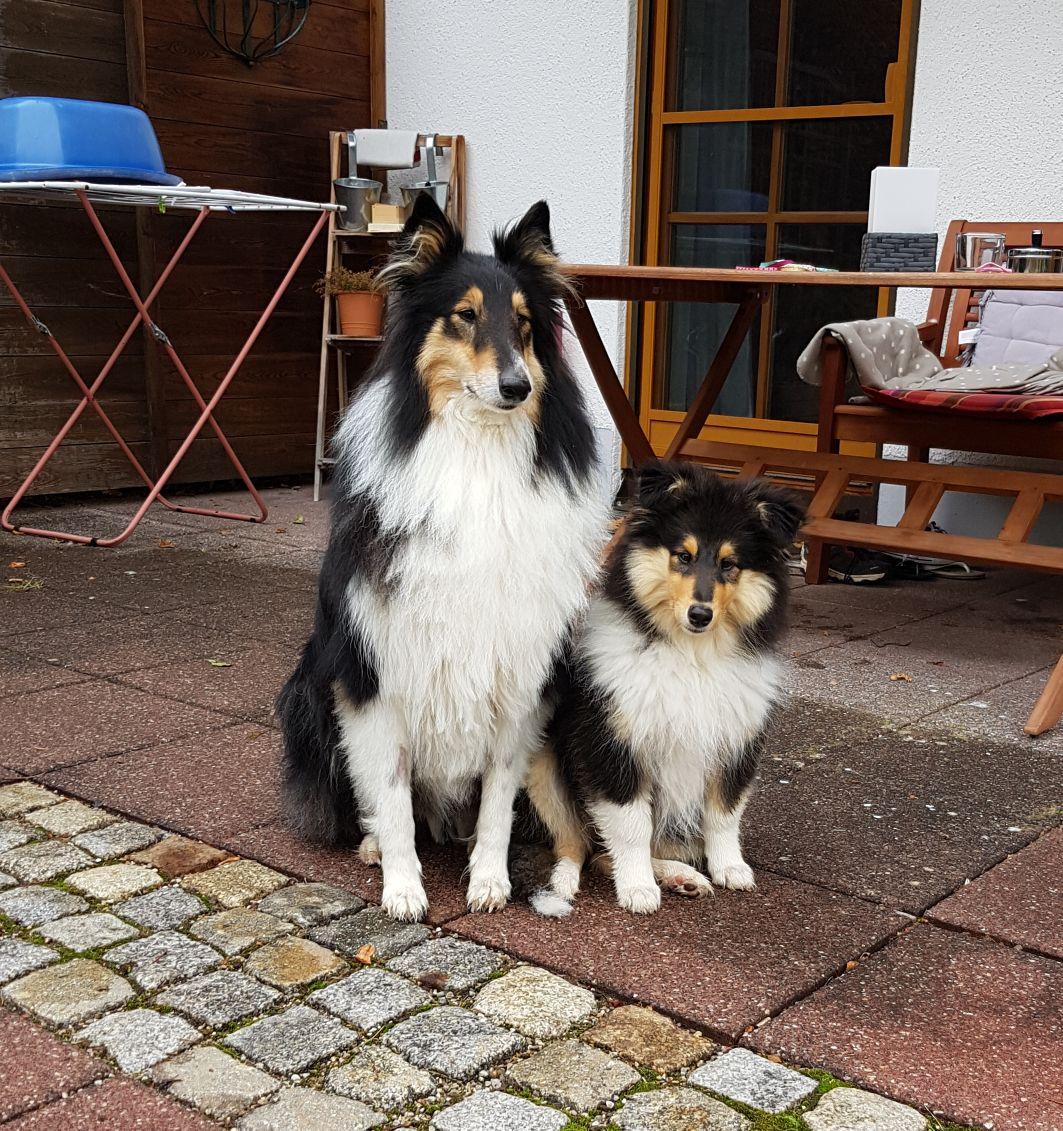 Bonny mit ca. 11 Wochen mit ihrem neuem Partner