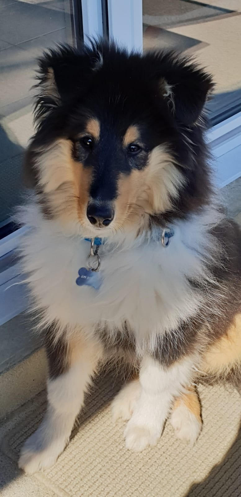 Dusty mit ca. 4 Monaten