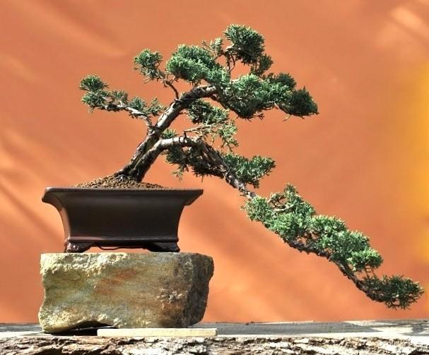 bonsai ausstellung anl 100 jahre klg steinfurt bonsai arbeitskreis steinfurt. Black Bedroom Furniture Sets. Home Design Ideas