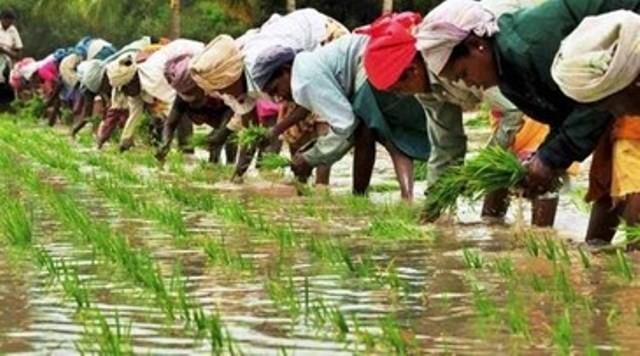 Fattige bondekvinder i Indiens Mahisagar distrikt
