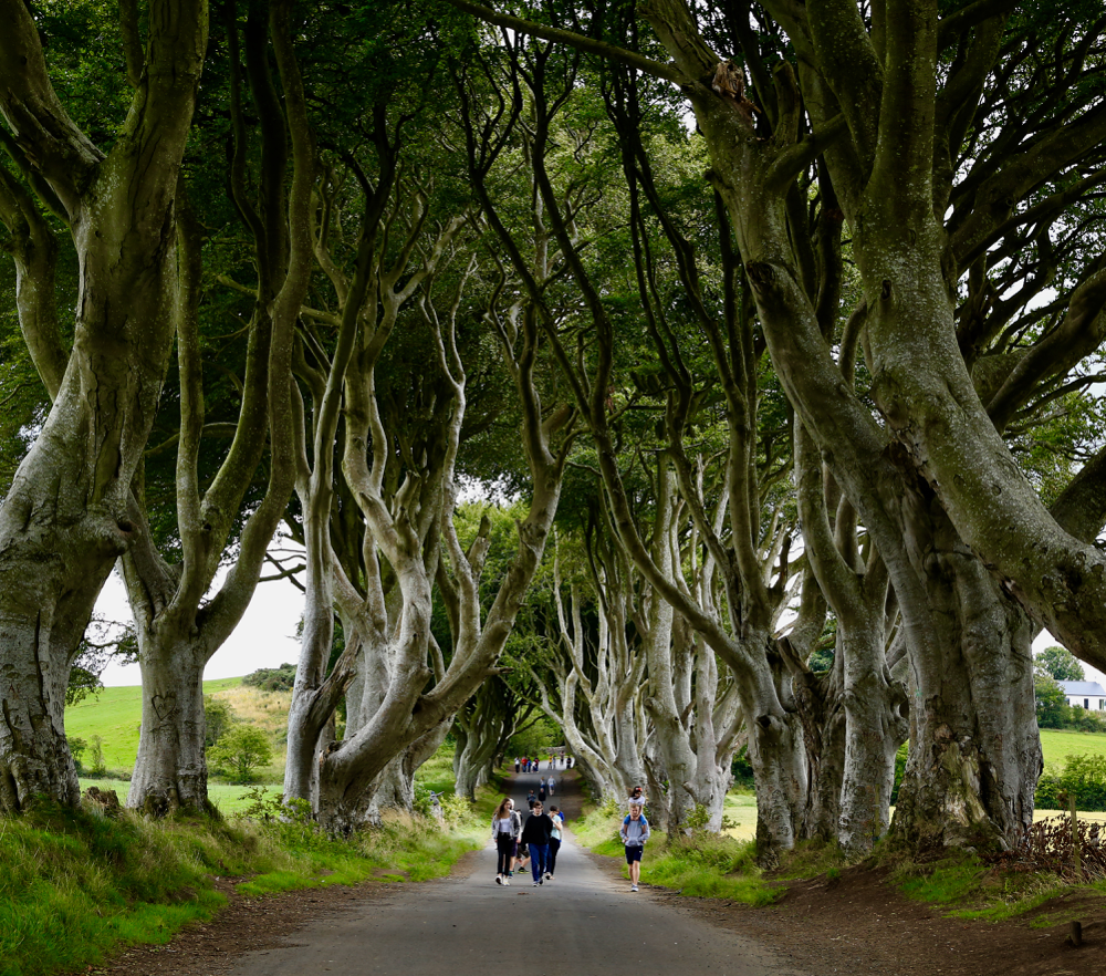 The Dark Hedges. Einer der Drehorte von Game of Thrones.