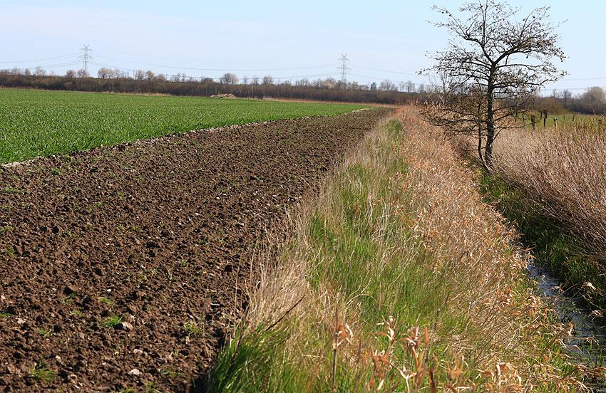 Wo der Blühstreifen  an einen Entwässerungsgraben grenzt,  entsteht ein naturbelassener Lebensraum für Tiere von gut 11 Metern Breite.