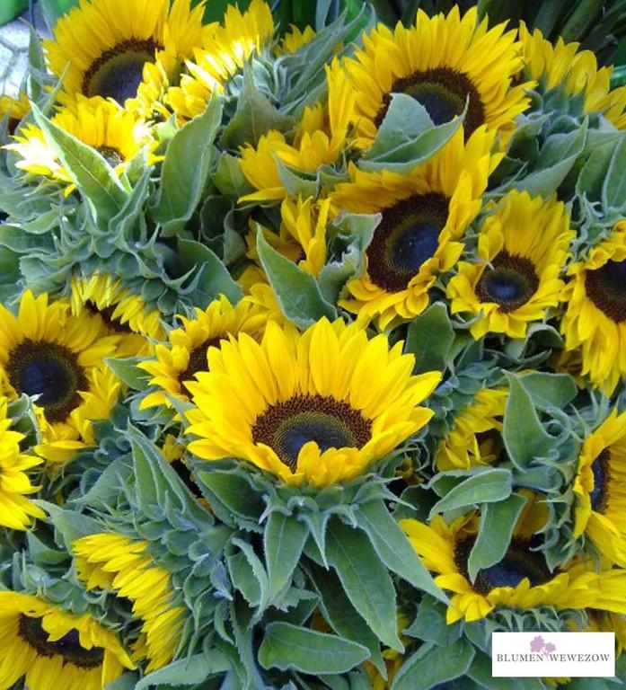 Sommerblumen Heidelberg- Sonnenblumen