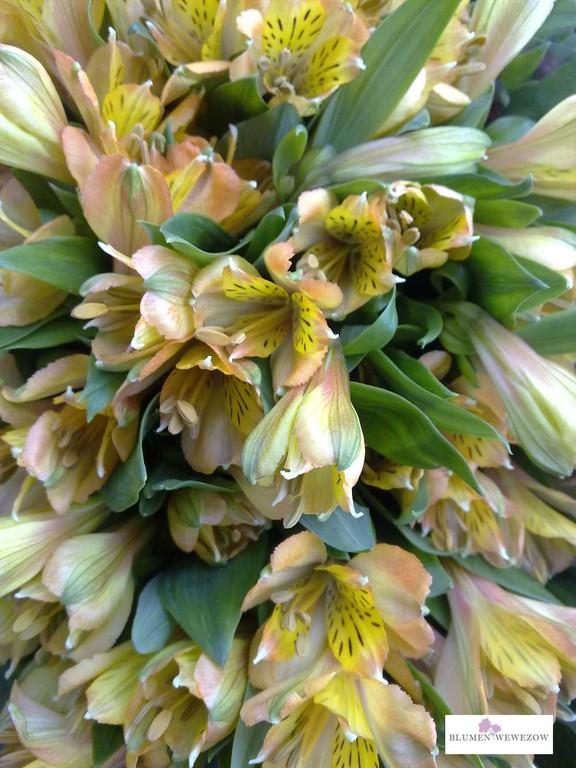 Sommerblumen Heidelberg - Alstromerien