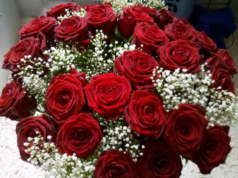 Rote Rosen zum Geburtstag - Für Dich, mein Schatz