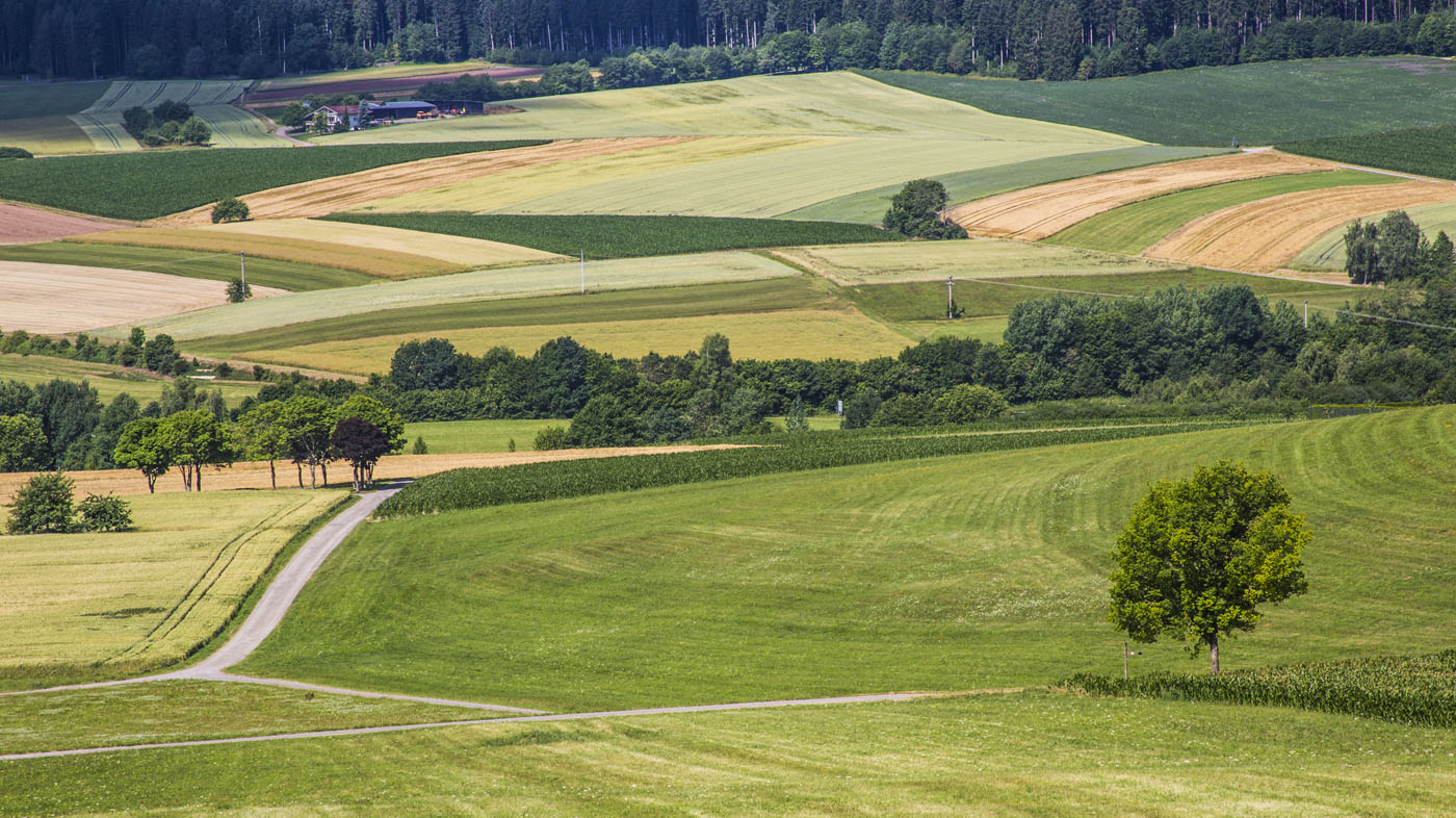 Feldergrafik bei Hörschweiler