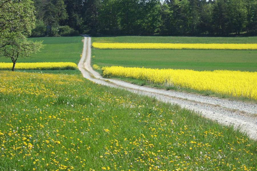 Weg Richtung Altheim