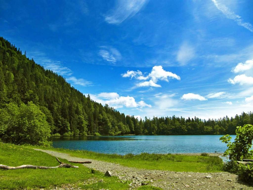 Im Feldsee gilt ein generelles Badeverbot. Es dient zum Schutz des stachelsporigen Brachsenkrauts (Unterwasserfarn), der in 1-2 m Tiefe gedeiht.
