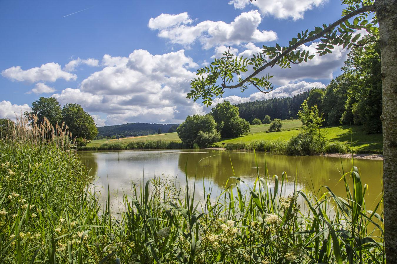 Am Hörschweiler See