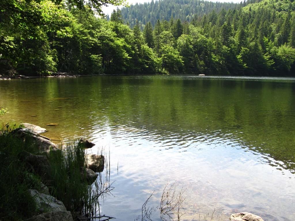 Den Feldsee durchfließt der Seebach, der zwischen Feldberg und Seebuck im Grüble entspringt, im Feldseewasserfall die Karwand hinunterstürzt und später, jenseits des Titisees, den Namen Gutach führt.