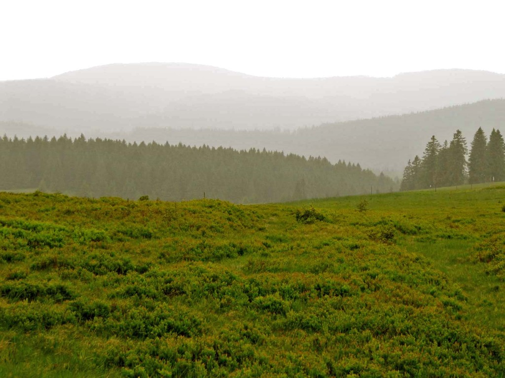 Leiser Regen - Trübe Aussichten über Weiden und Wälder.