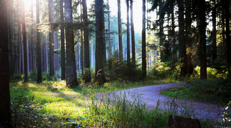 Rundkurs im Wellness-Wald