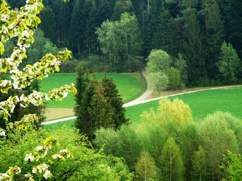 Wald an der Riedhalde