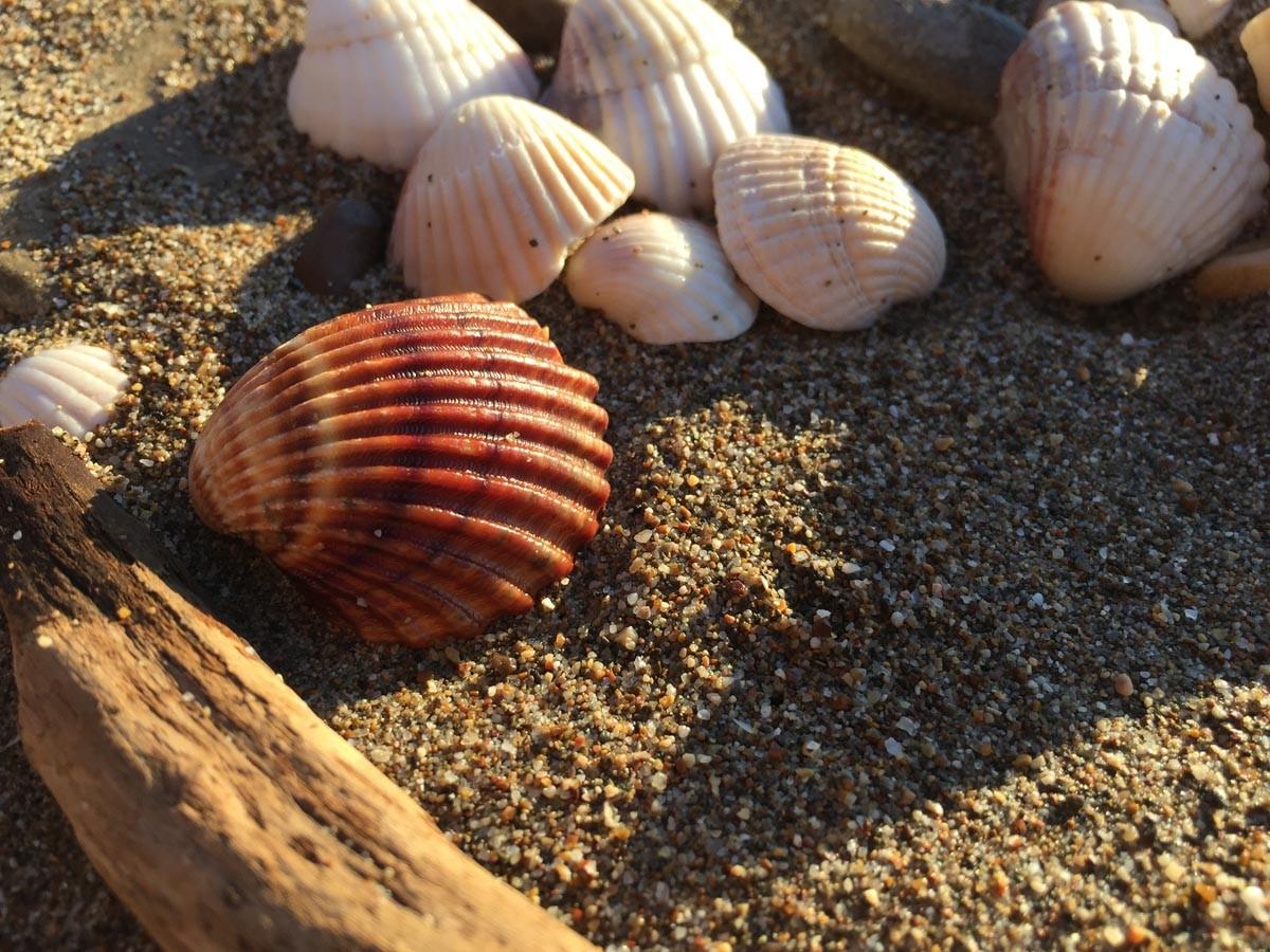 Strandfundstücke