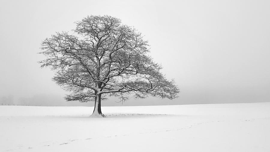 Baum im Winter-Nebel