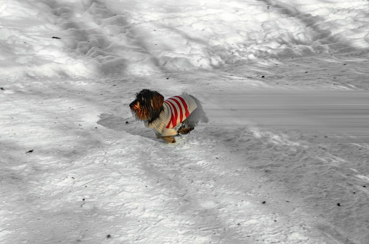 """Winter-""""Speed"""" ... auch Vierbeiner genießen Schnee und Sonne"""