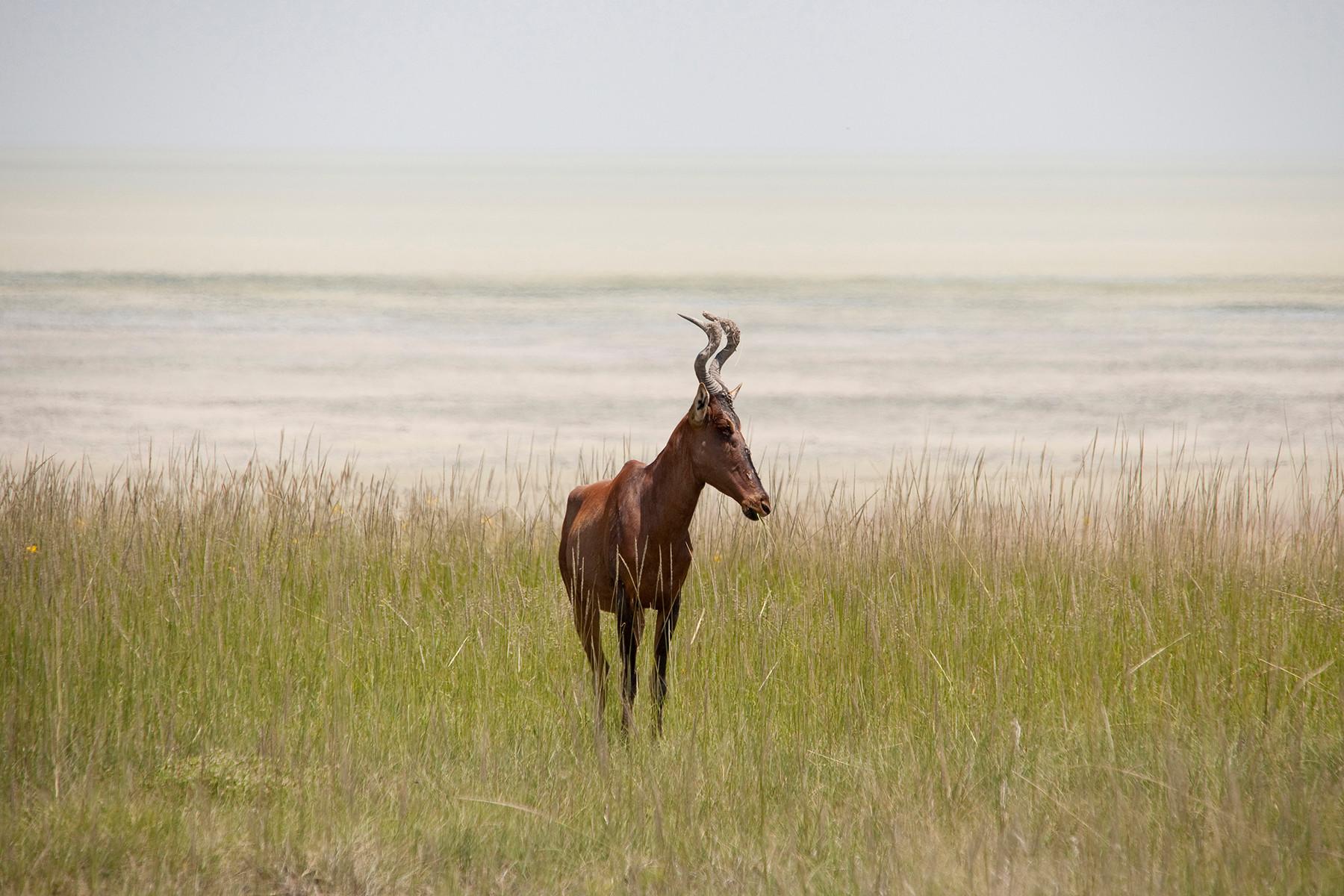Namibia 2012 (Etosha)
