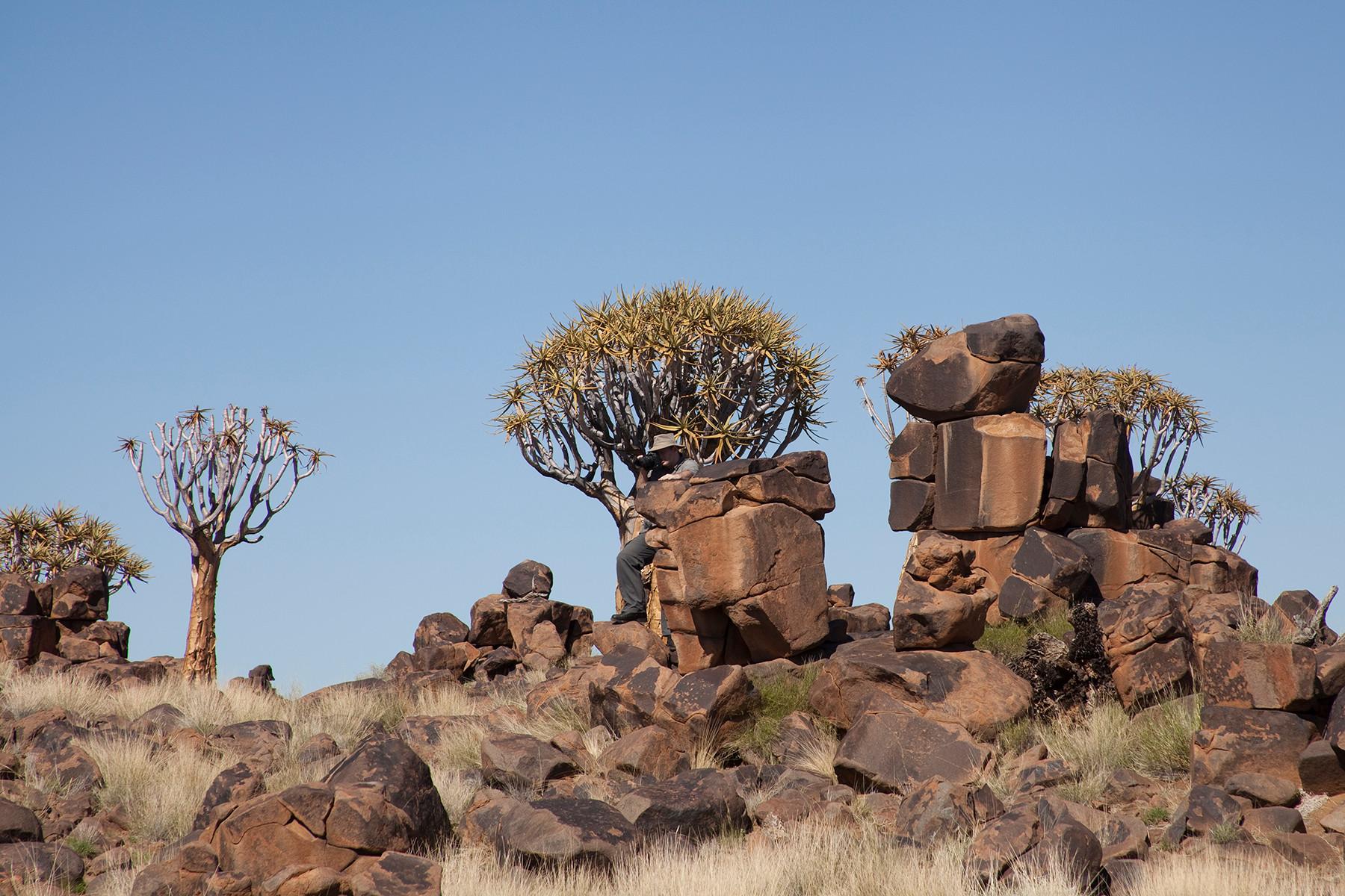 Namibia 2012 (Mesosaurus)